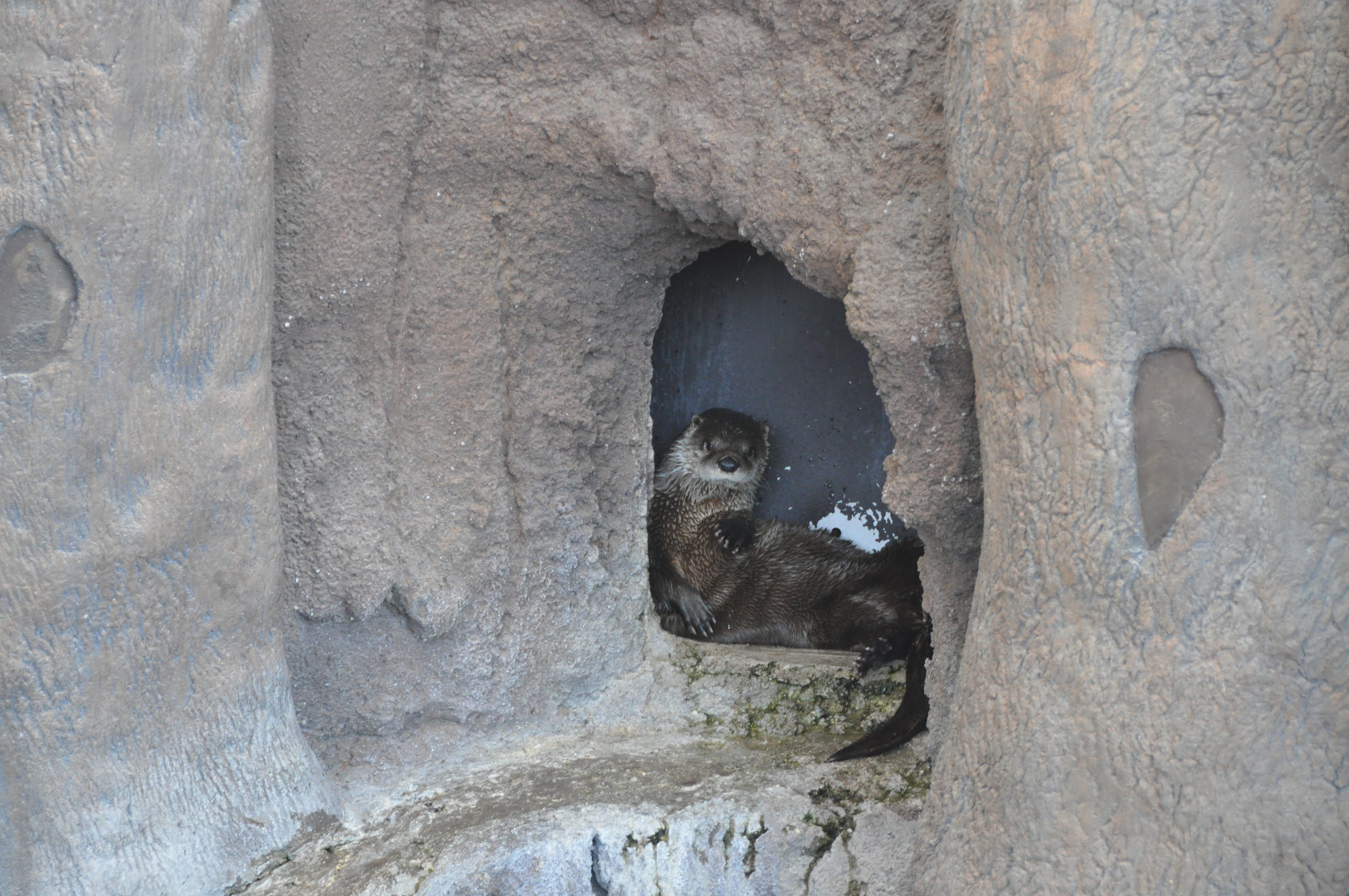 Otter Found a Tiny Nook to Hang Out In