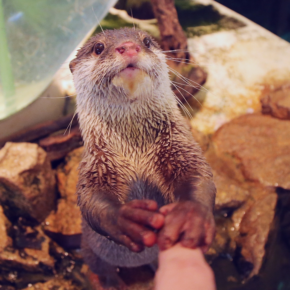 Lets Touch Hands Human Look Im Touching The Humans Hand The
