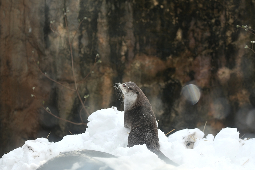 Otter Model Has Mastered the Over-the-Shoulder Pose 3