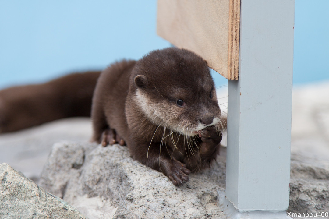 Otter Pup Is Getting Philosophical Right Now