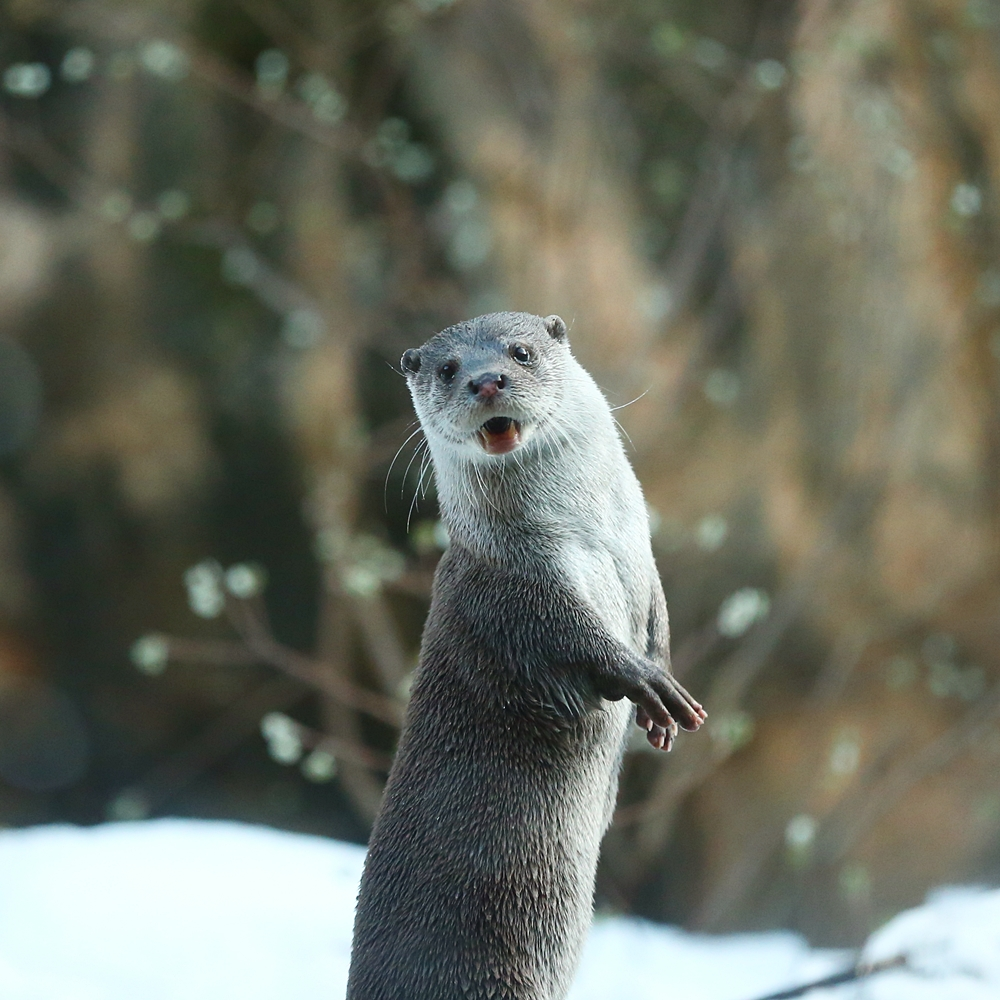 Otter Model Has Mastered the Over-the-Shoulder Pose 2
