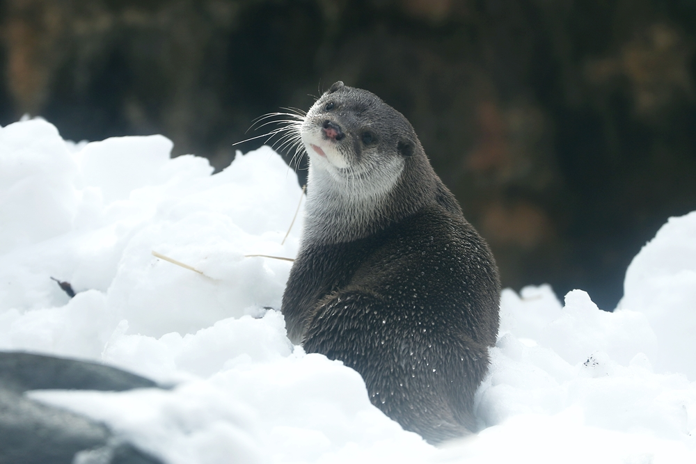 Otter Model Has Mastered the Over-the-Shoulder Pose 1