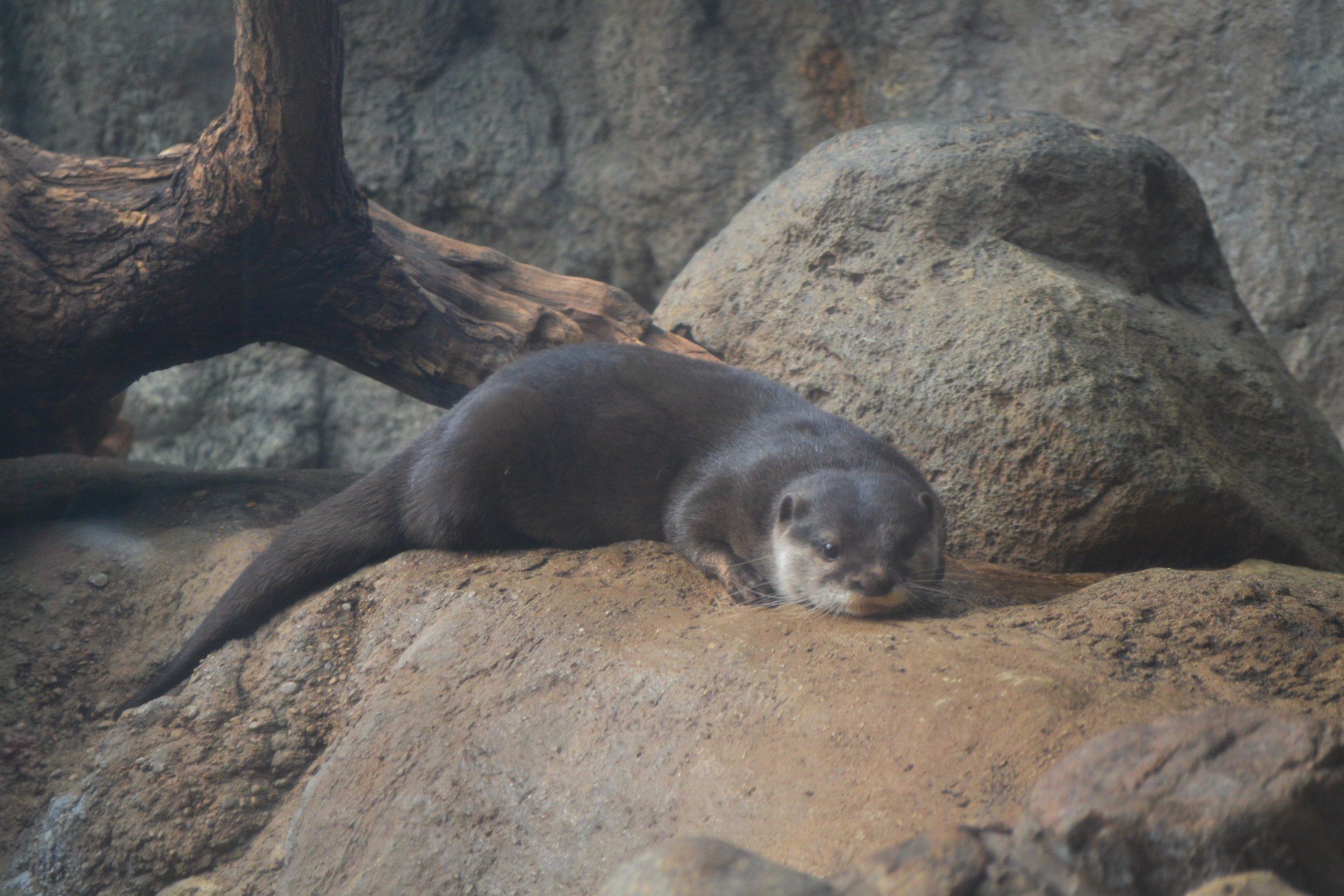 Otter Has a Nice, Quiet Little Rest
