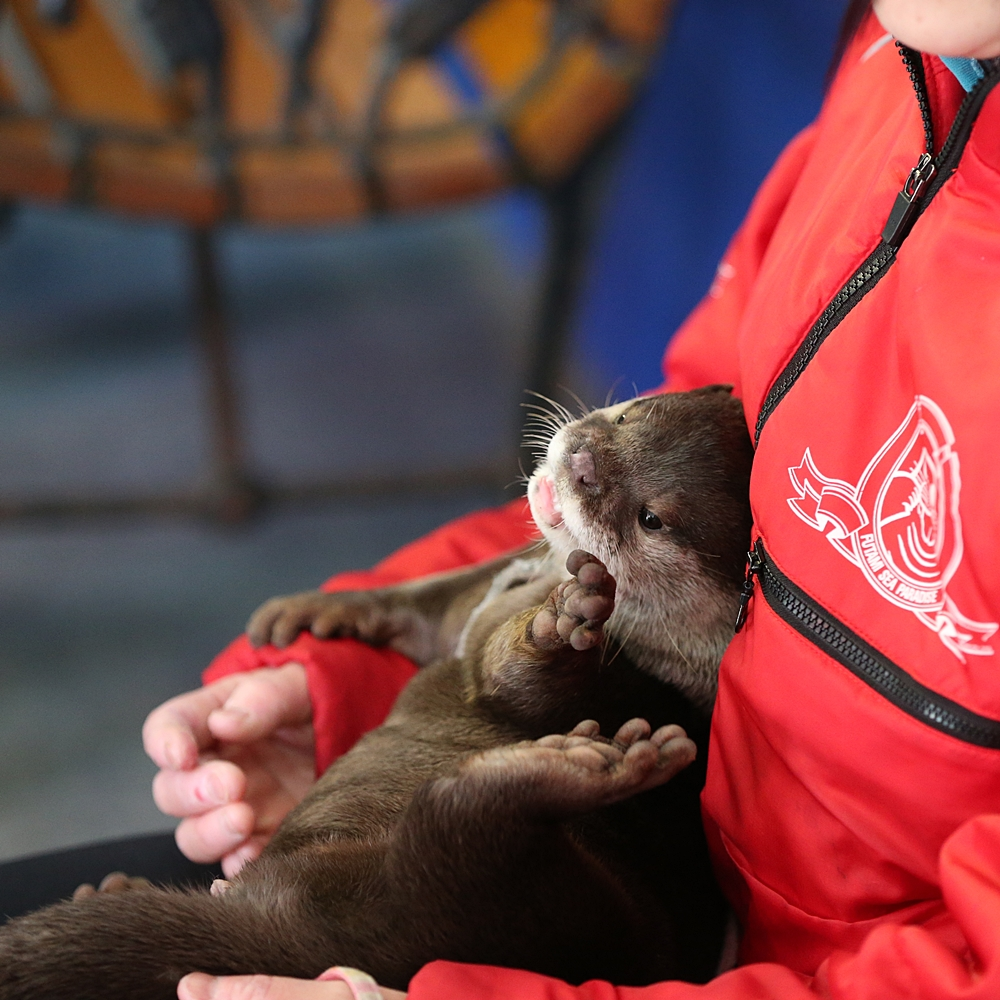 Little Otter Yamato Plays Up the Cuteness