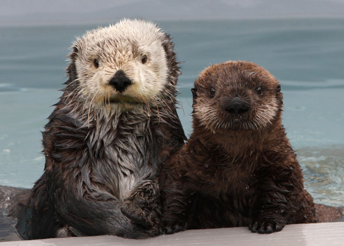 Never Have Sea Otters Posed So Perfectly for a Portrait