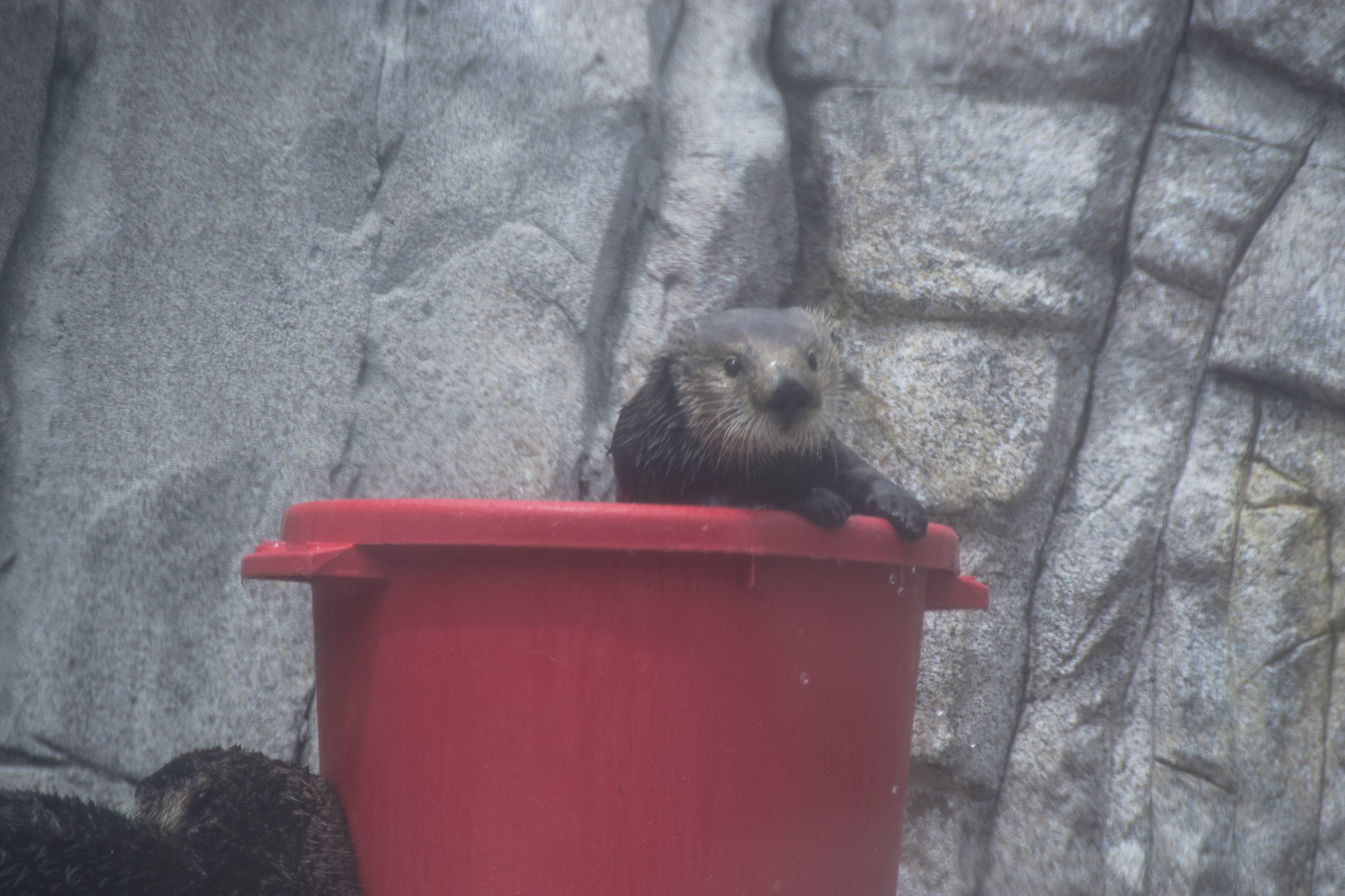 I'm in My Bucket. Nooo, Don't Pull Me Out of My Bucket! 1