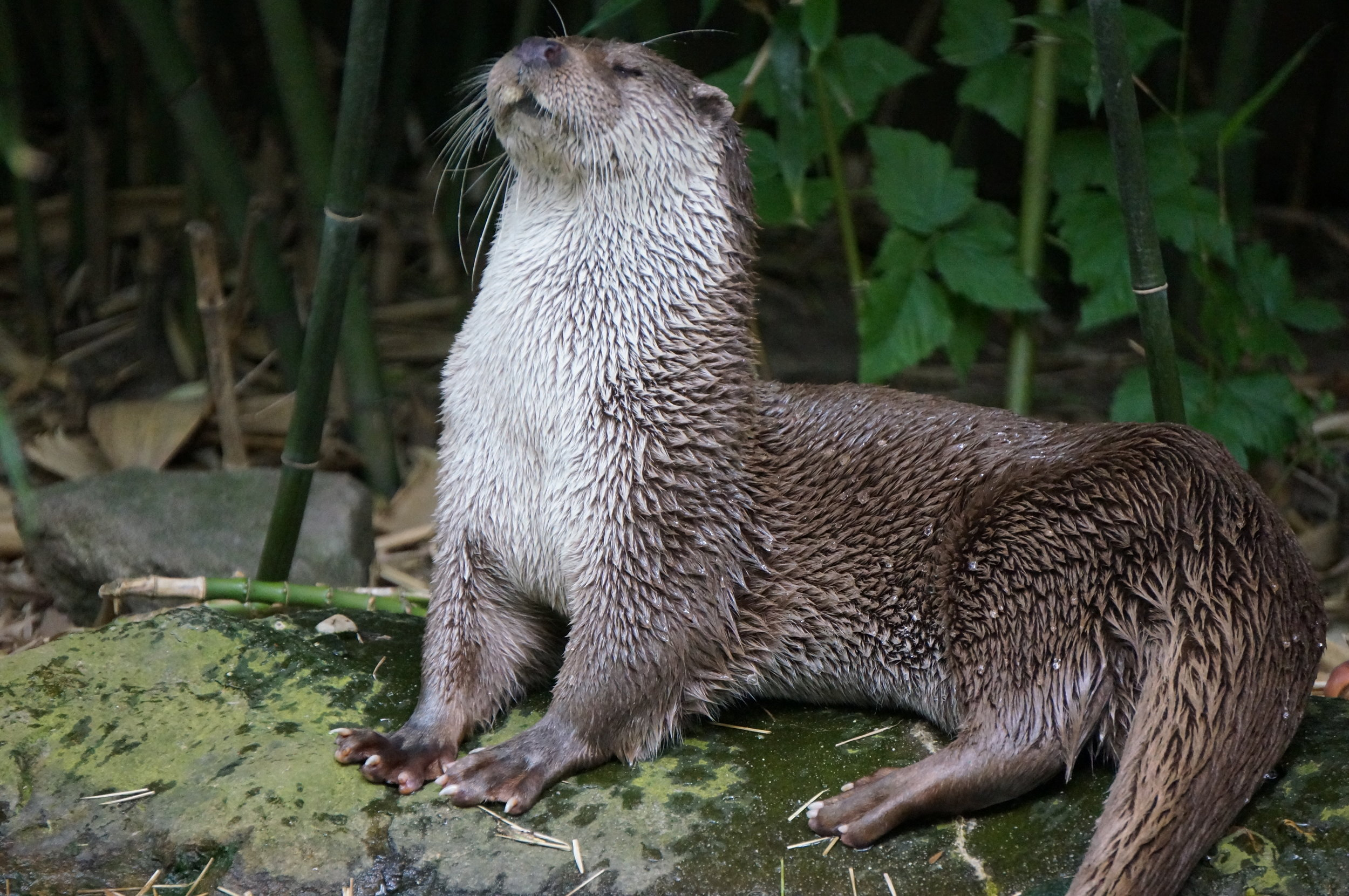 Proud Otter Holds Her Head High