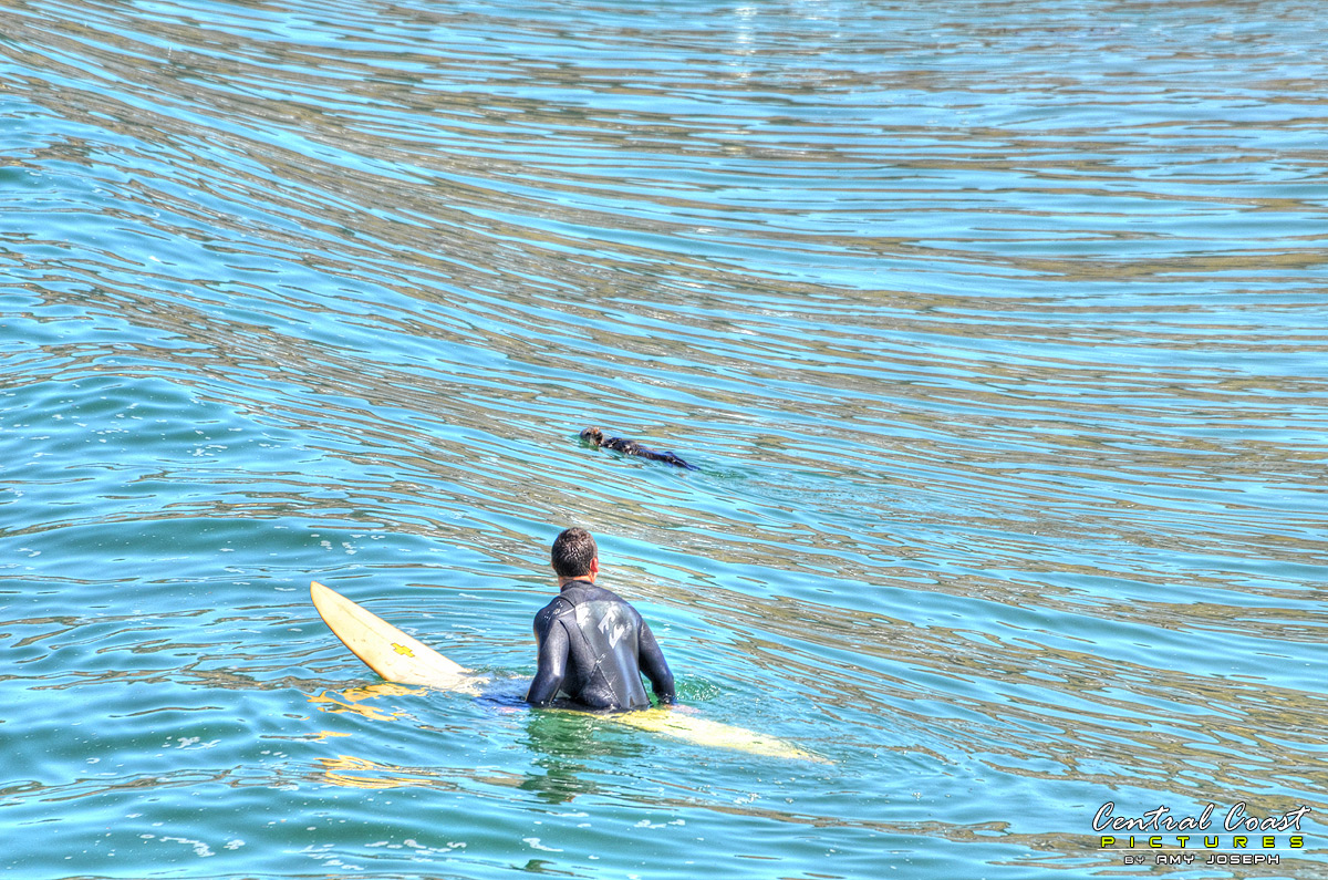 That Surfer Could Learn a Thing or Two from That Sea Otter