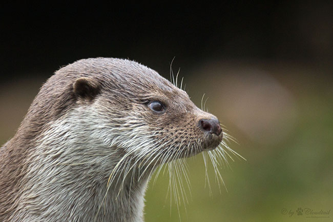 Otter Is a Very Intense Otter