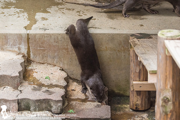 Well, That's One Way Down the Stairs, Otter