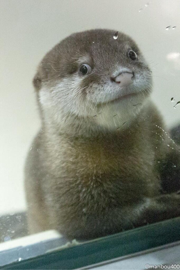 Otter Pup Tries to Look Natural