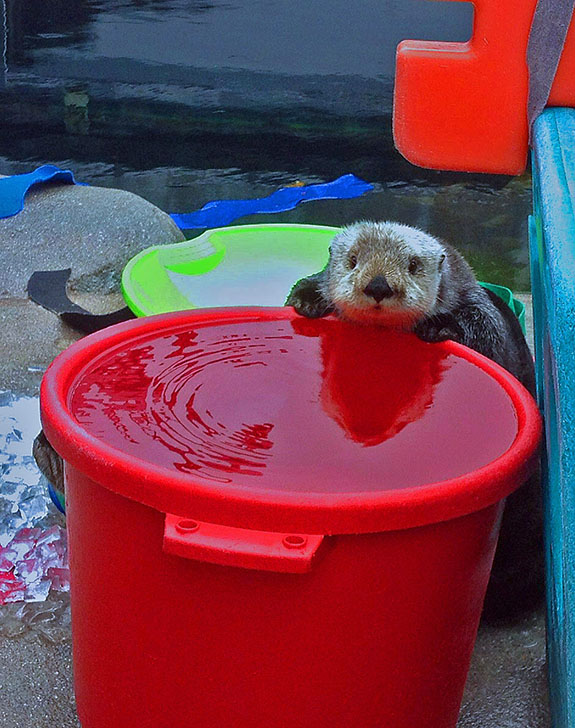 This Is My Bucket. They Put Water in It for Me.