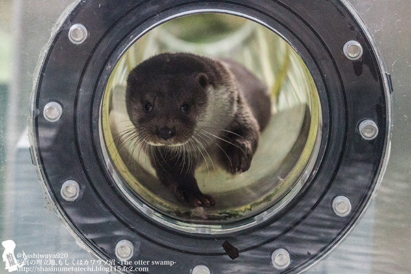 Here Comes Otter in the Ottertube