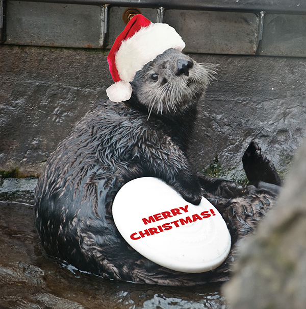 Sea Otters Wally and Katmai Spread Holiday Cheer 2