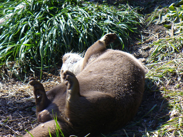 Otter Gobbles Up an Egg and Warms His Belly in the Sunlight 2