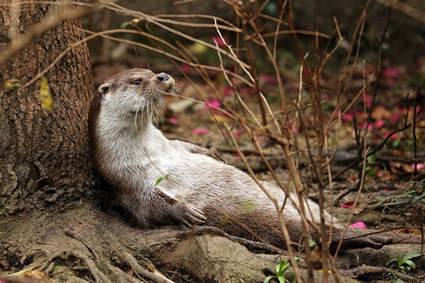 Otter Lounges Under a Tree
