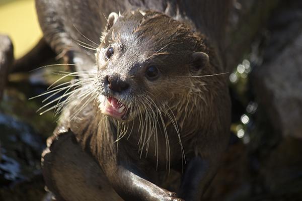 Otter Shock!