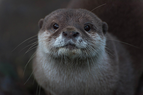 Otter Sits Still for a Photo