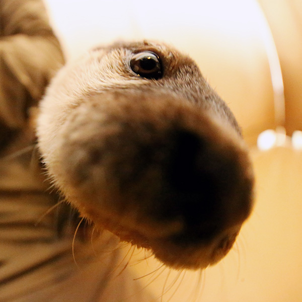 Curious Otter Noses Up to the Camera