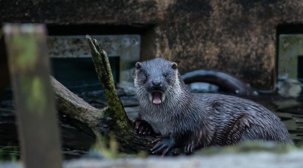 Otter Surprise!