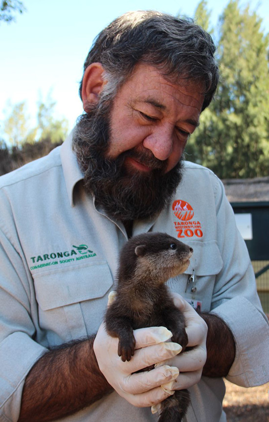 New Otter Pups at Australia's Taronga Zoo! 3