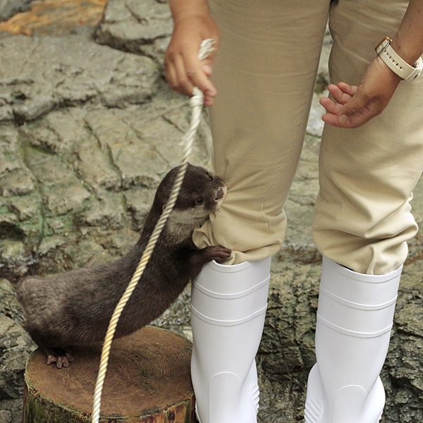 Otter Tries to Nom His Human Keeper