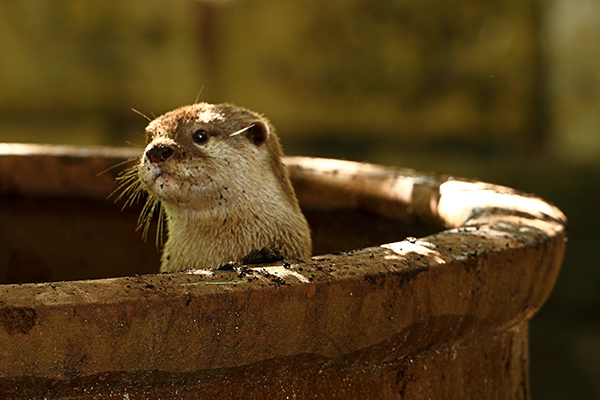 Otter's Been Playing in the Dirt