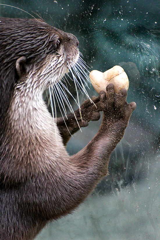 Who Will Accept Otter's Heart-Shaped Rock?