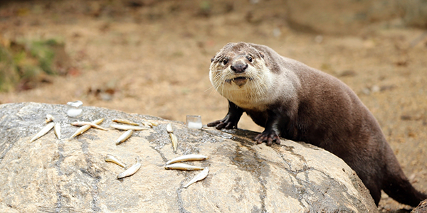 Otter Gets a Birthday Note Spelled Out in Fish 2