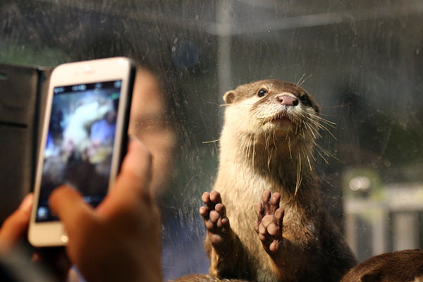 Otter Has His Picture Taken Twice at Once