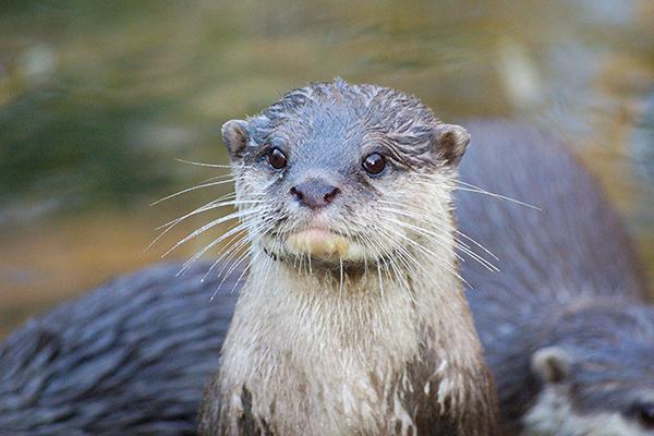 Otter Is Alert