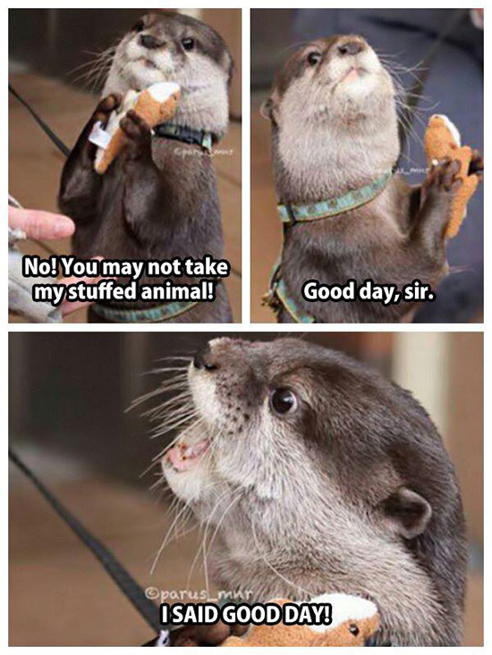 Otter Doesn T Want To Share His Stuffed Otter The Daily Otter