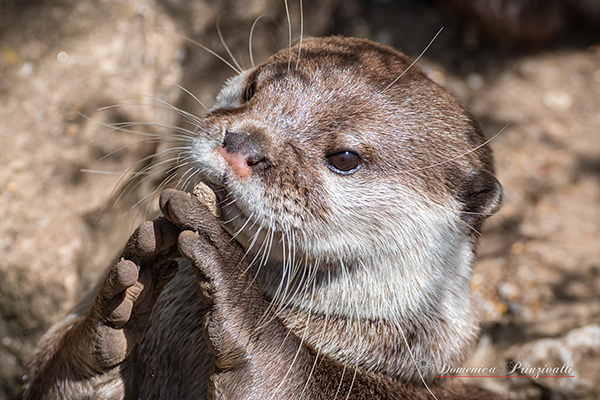 Otter Has a Tiny Stone