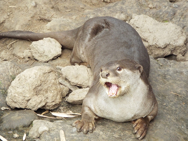Otter-Is-Waiting-for-You-to-Laugh-at-His-Joke