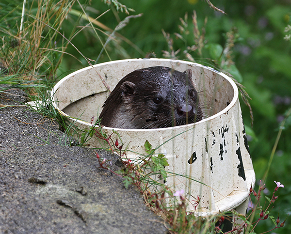 Otter's Found a Great Spot for Spying