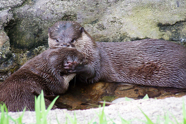 Otter Pulls His Friend Close for a Kiss