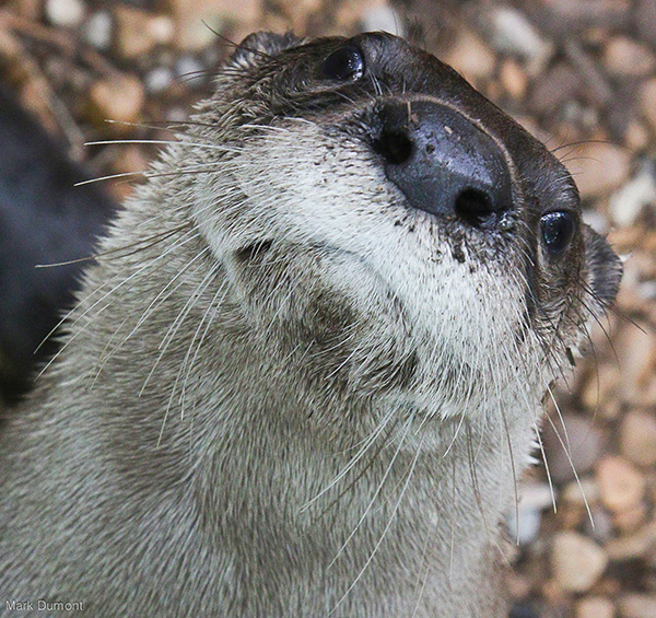 Otter Looks a Little Weirded Out by This Closeup