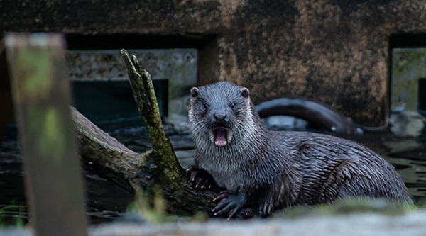 Otter Is Shocked! Shocked, I Tell You!