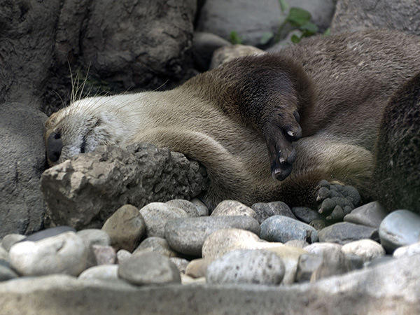 That Doesn't Look Very Comfortable, Otter
