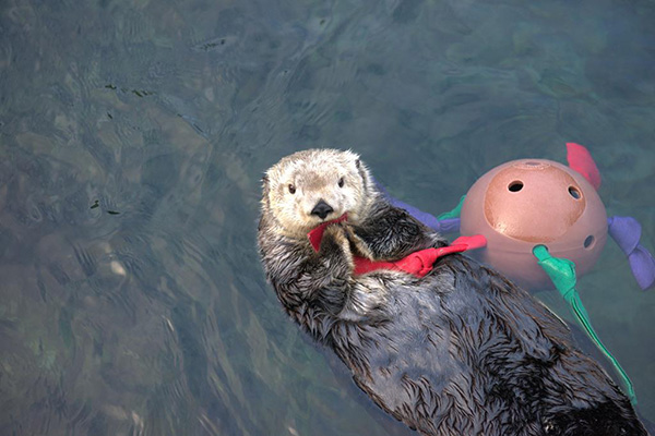 What an Interesting Toy You Have, Otter!