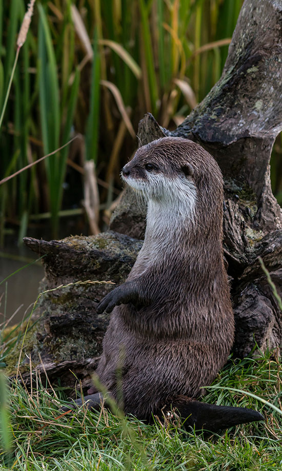 Otter Has a Very Cute Way of Sitting