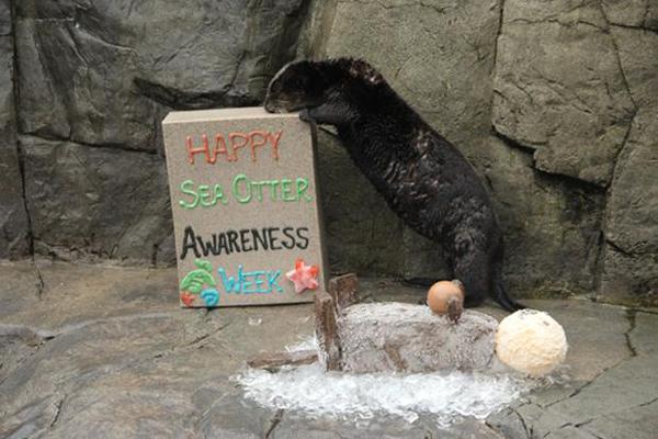 Sea Otter Celebrates Sea Otter Awareness Week