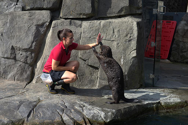 Sea Otter Gives Human a High Five