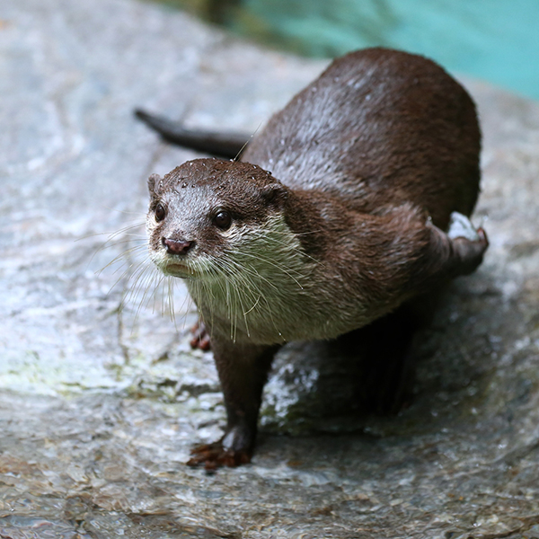 Otter Considers His Next Pitch