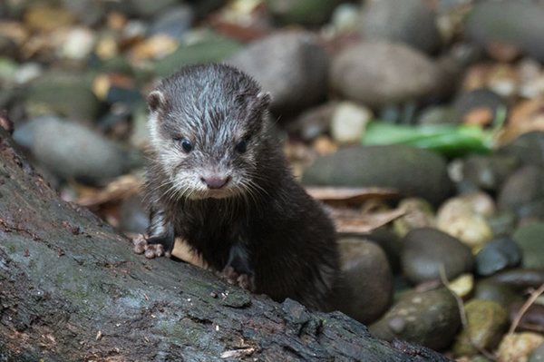 Otter Pup Explores His New Home 1