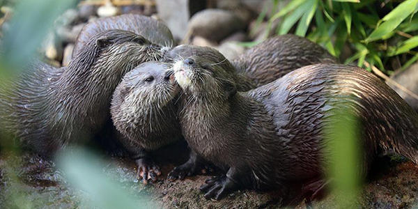 Otters Give and Receive Kisses