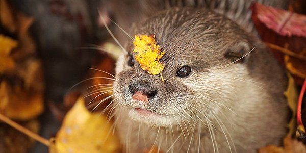 Hey Otter, You Have a Leaf on Your Face