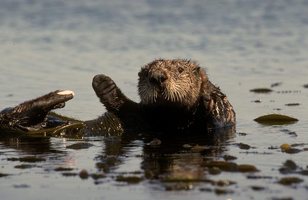 Hi, Humans! Care for a Swim?