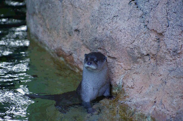 Otter Takes a Little Break from Swimming