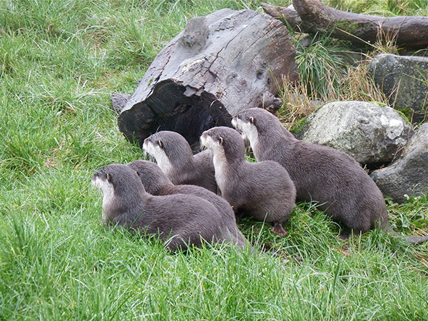 Otters Are Hypnotized